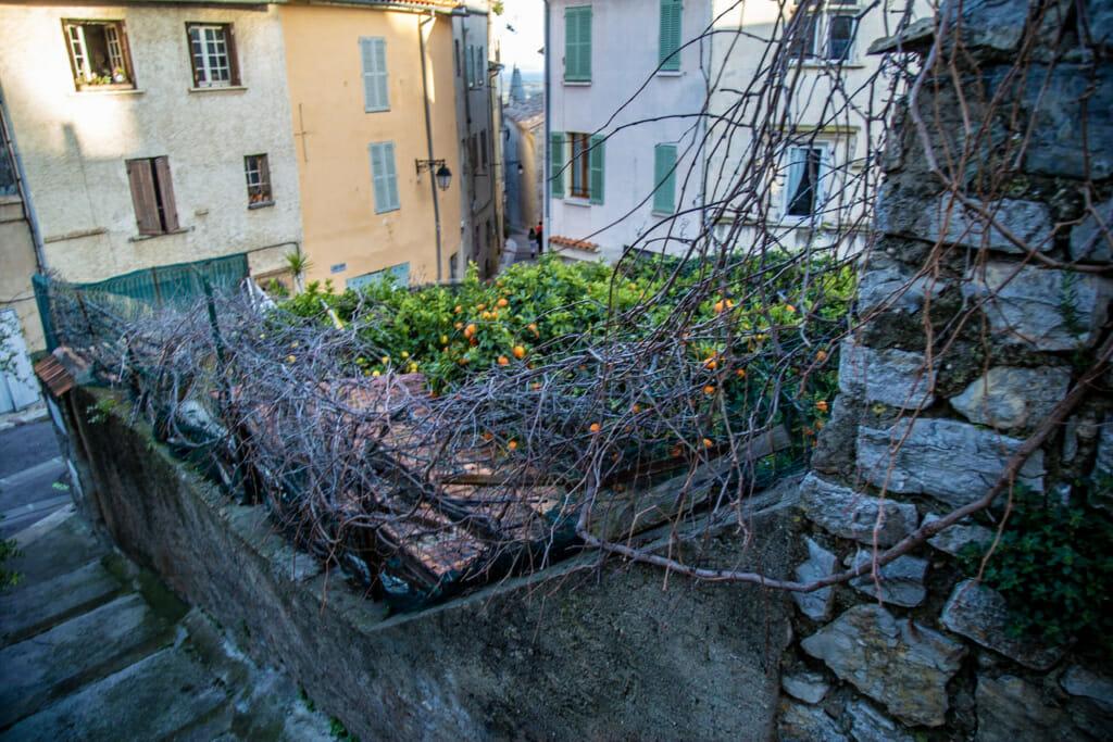 orangers-vieille-ville-hyeres